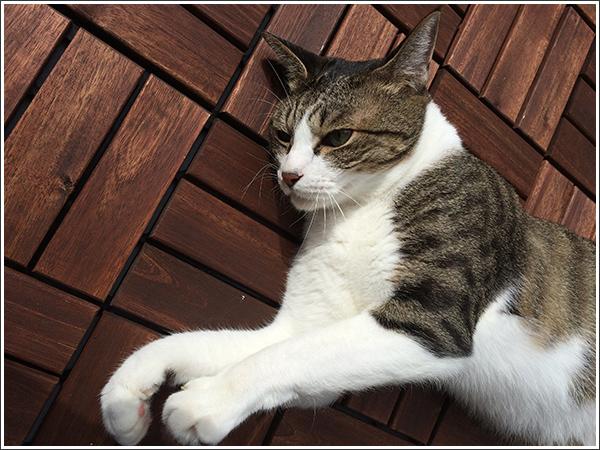 キッドという癒し系の猫