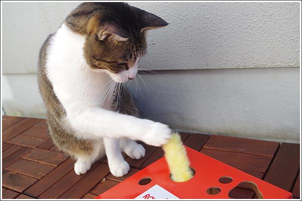 キッドを「猫じゃらしBOX」で遊ばせてみた