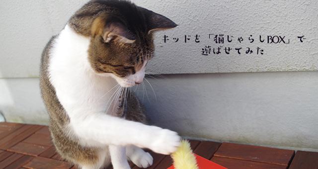 「猫じゃらしBOX」で遊ばせてみた