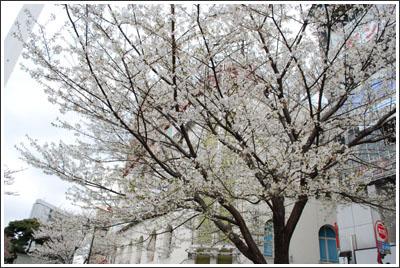 D60で池袋の桜を撮ってみた