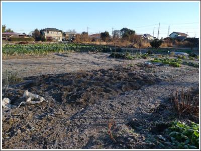 今年一番の寒さに畑も凍る