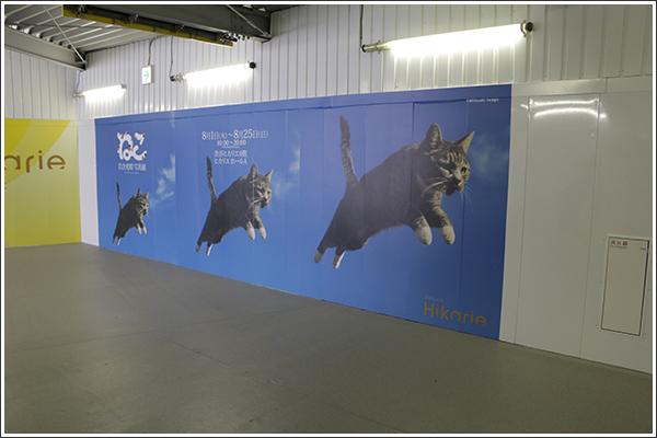 岩合光昭写真展 ~ねこ~ は世界の「野良猫」が堪能できる写真展だった!